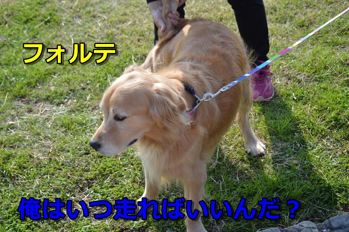 DSC_0952-005.jpg