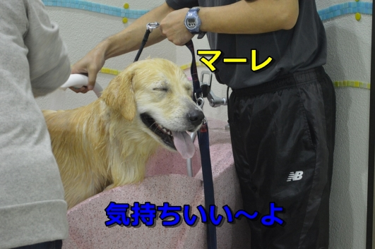 DSC_0976-005.jpg