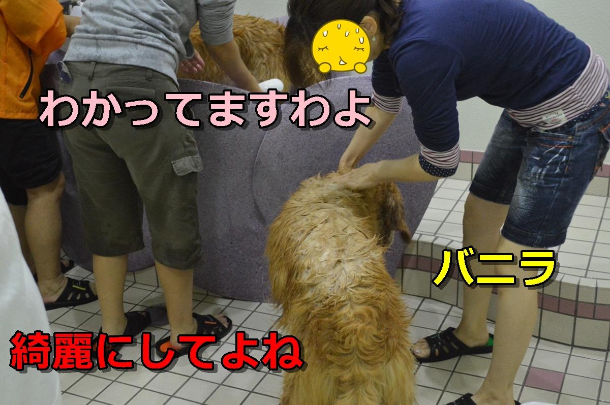 DSC_0978-007.jpg