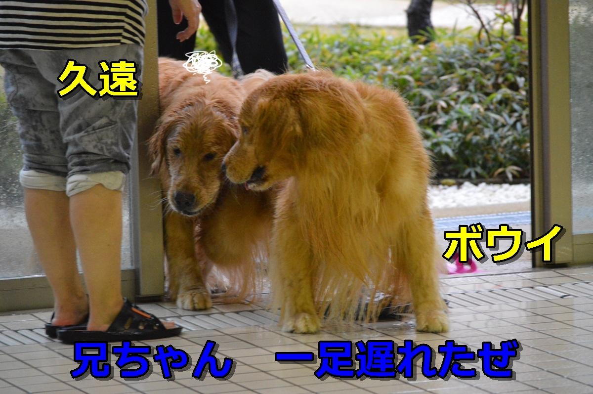 DSC_0985-014.jpg