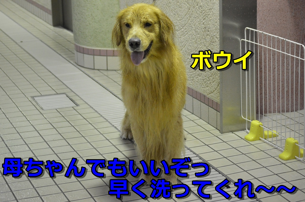 DSC_0995-024.jpg