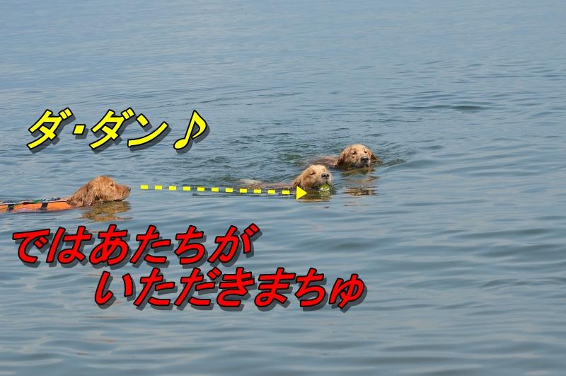DSC_1010.jpg