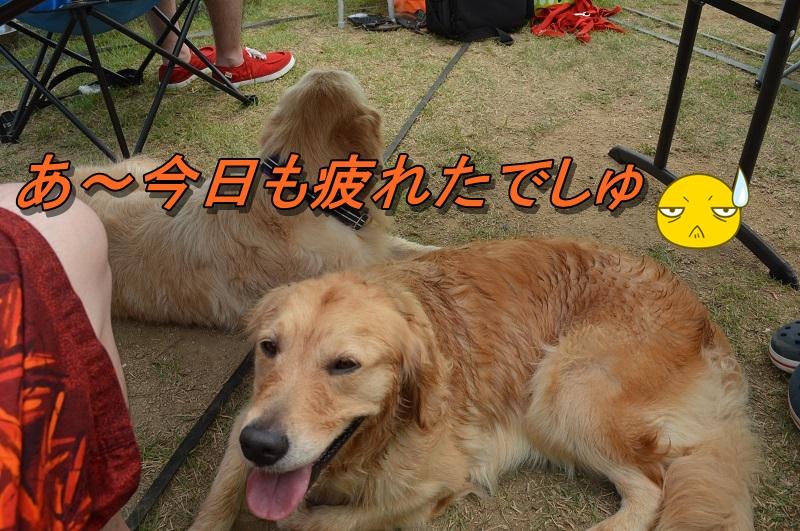 DSC_1028_20130813203944308.jpg