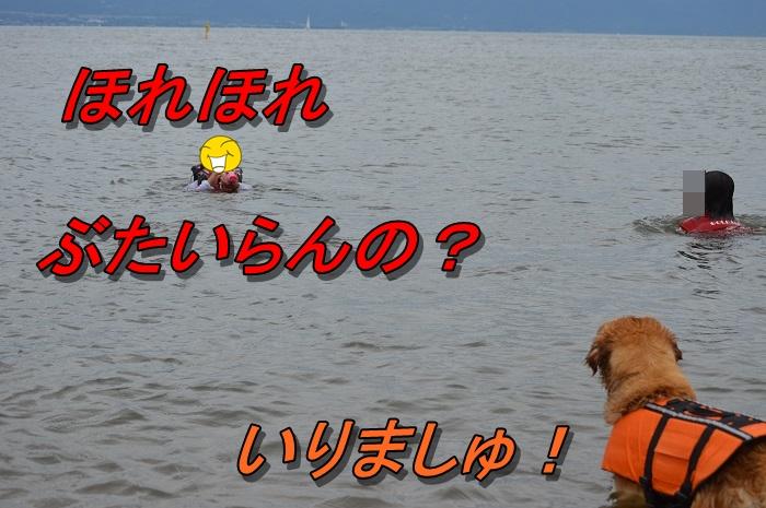 DSC_1030_20130720221524.jpg
