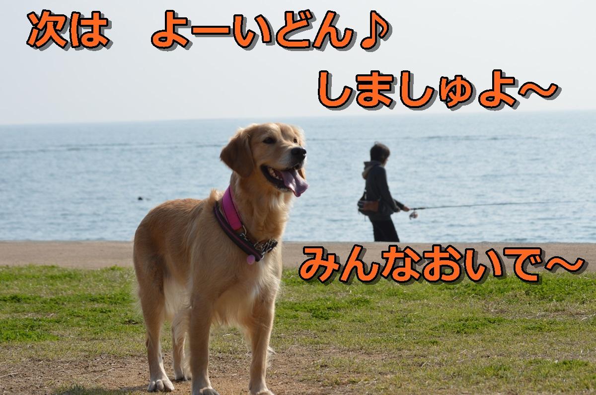 DSC_1032-001.jpg