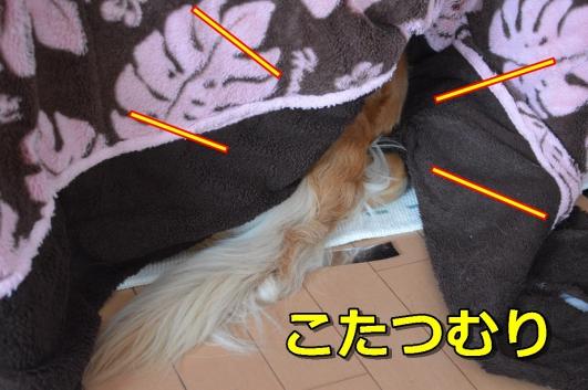 DSC_1038-001.jpg