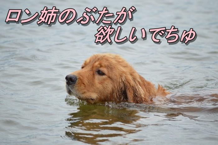 DSC_1103_20130720221648.jpg