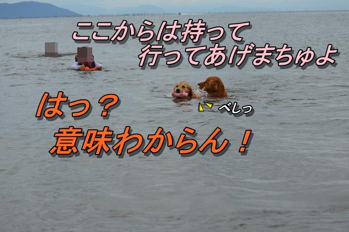 DSC_1113_20130721231703.jpg