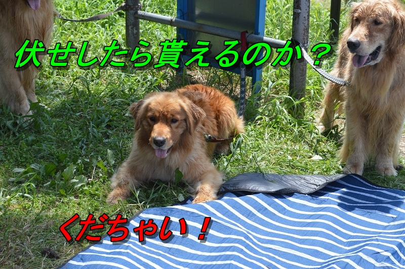 DSC_1136_201308252246440a7.jpg