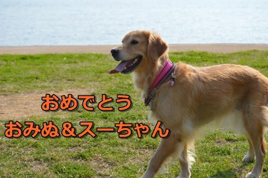 DSC_1235-064.jpg