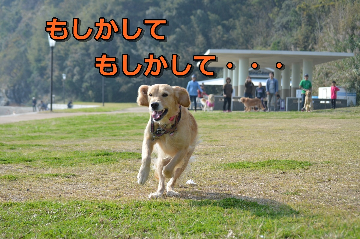 DSC_1268-034.jpg