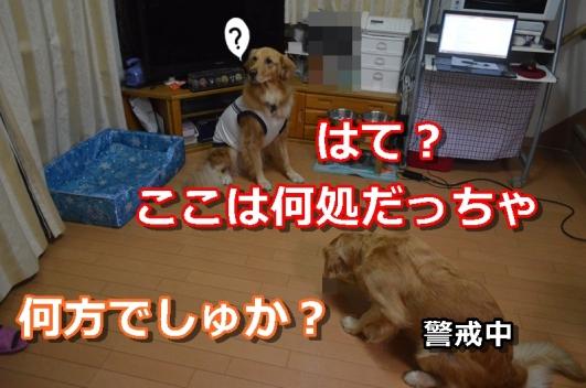DSC_1443-008.jpg