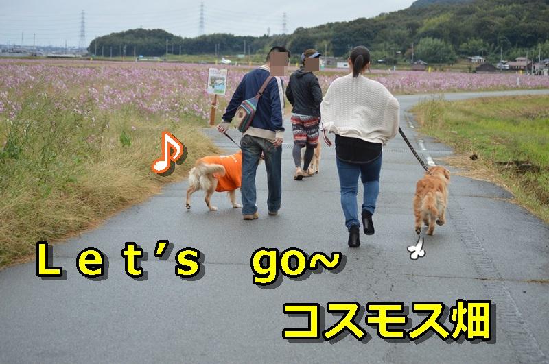 DSC_1601-052.jpg