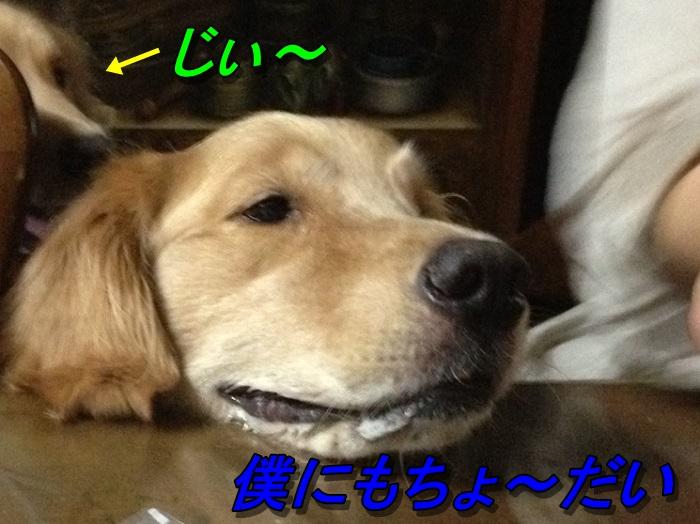 IMG_5360.jpg