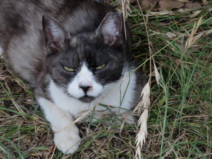 野良猫B20130609