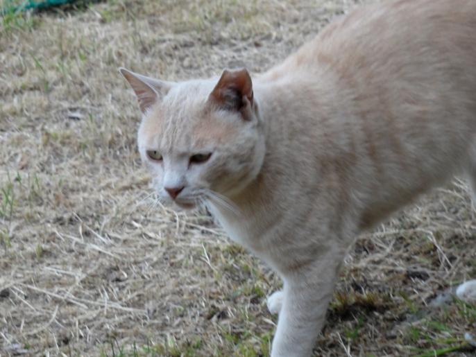 野良猫A20130609