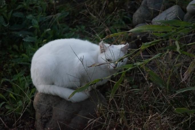 白猫20131028A