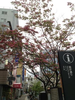 2013223県庁通り