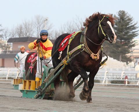 【ばんえい競馬】テンマデトドケ蹄葉炎で急死していた…「ほこ×たて」で「絶対に滑らない最強ゴムシート」に勝利