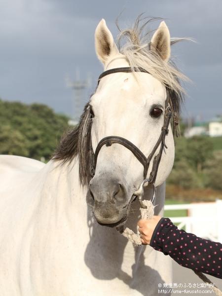 【競馬】クーリンガーが種牡馬生活を引退、新冠町のにいかっぷホロシリ乗馬クラブに移動