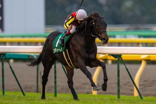 【コディーノ】天皇賞の坂上で脚色鈍り5着・リスポリ騎手「1マイルなら、相当な器だと感じました」