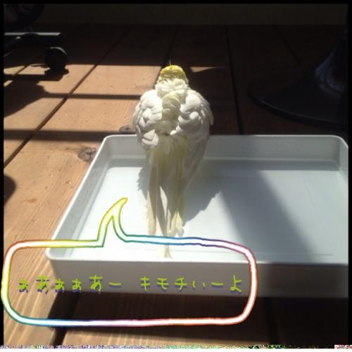 image_20130515162530.jpg