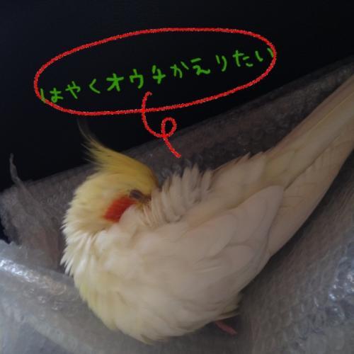 image_20130608192927.jpg