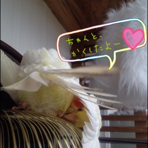 image_20130613172426.jpg