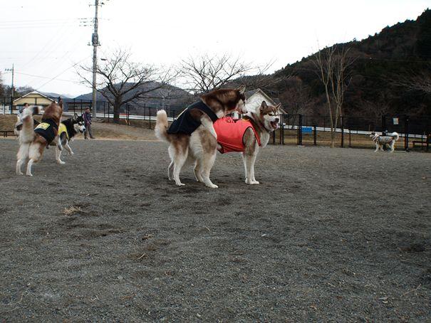 2012.01.02やどりぎ②