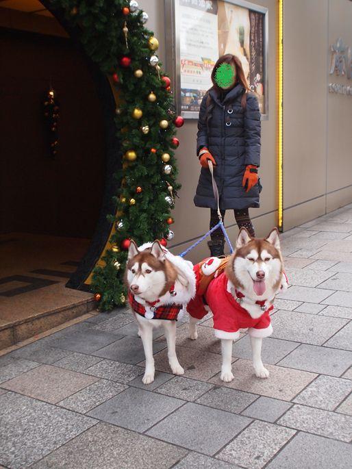 クリスマスウォーク