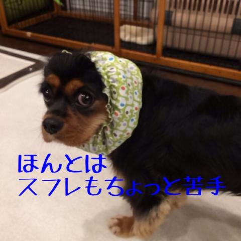 fc2blog_20141028210520447.jpg