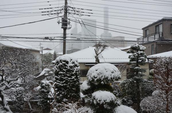 018yuki.jpg