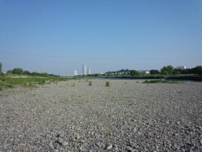 多摩川 河原