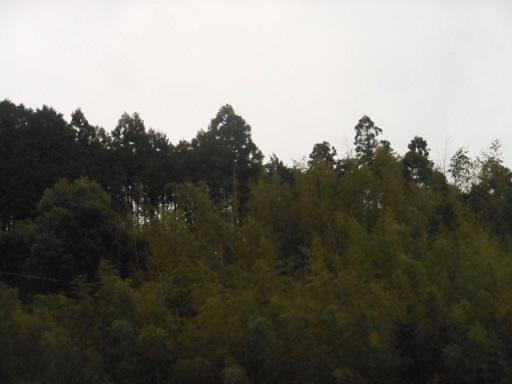 2601301.jpg