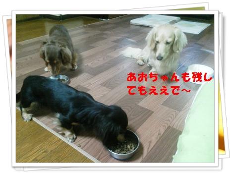 NEC_0519.jpg