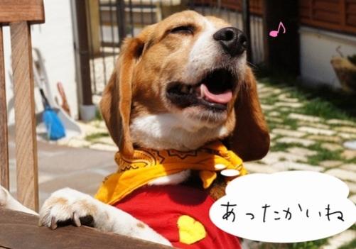 image_20130405215207.jpg