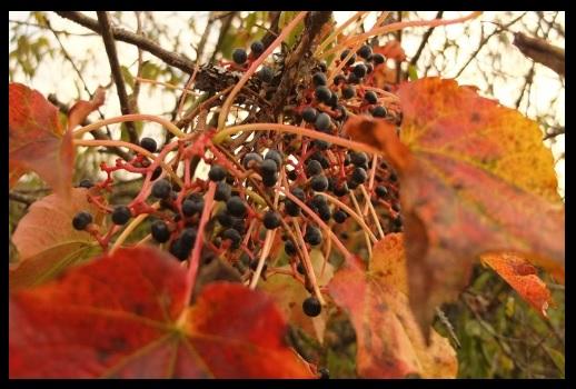 実りの秋。