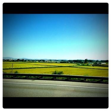 高速道路からは黄金色の水田が多くみえました。