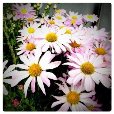 花が咲く街