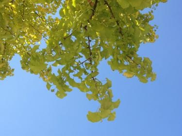 秋晴れ。気持ちがいいです