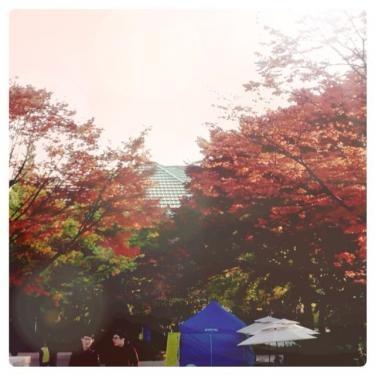 キャンパス内、紅葉しているところも。。
