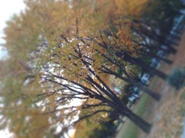 色付いた木々の公園もあり休憩したりお茶を楽しむ学生も。