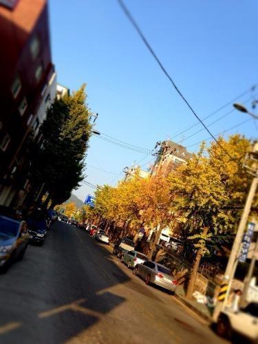 新村へ向かう道も紅葉してきました。