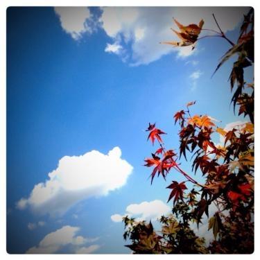 秋晴れの空。