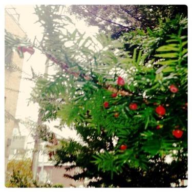 雨のホンデ。住宅街にて。