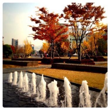 色付いた街路樹で大学内は色鮮やか。