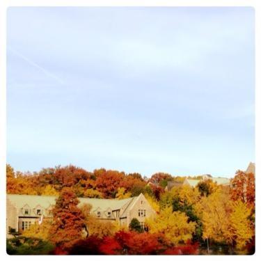 秋の梨花大。