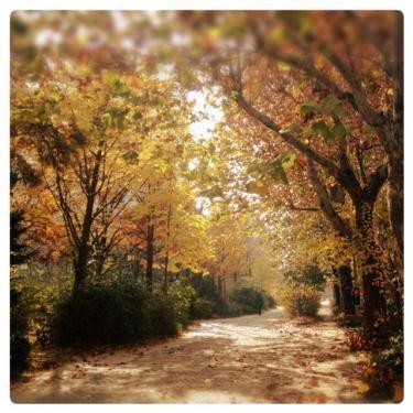 ここ数日の風で大学内のキャンパスの紅葉もだいぶ落ち葉へ・・。