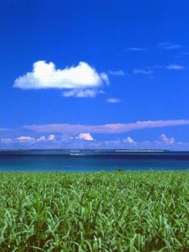 さとうきび畑と海
