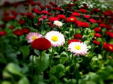 道端で見かけた可愛い花